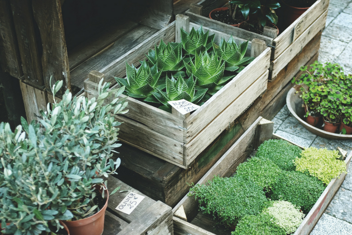 Container-Gardening-Blog-Sweetwater (3).png