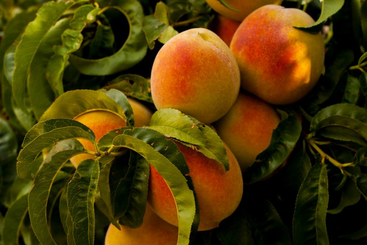 Sweetwater-Texas-Hill-Country-Peaches-Blog-Post.png